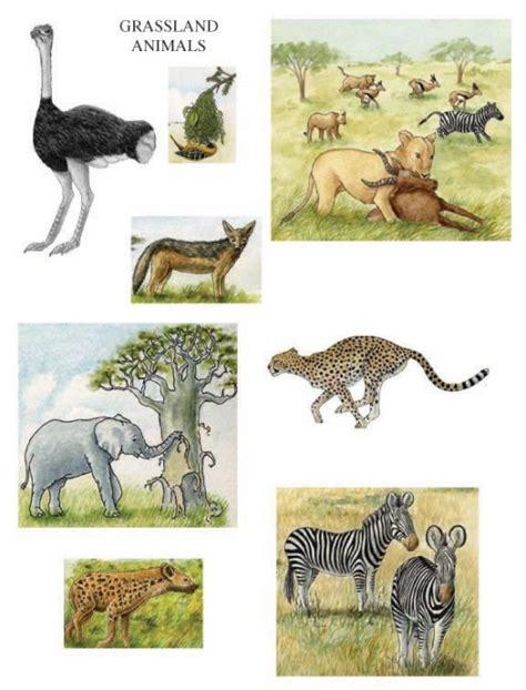 Animals That Live in Grassland Habitats