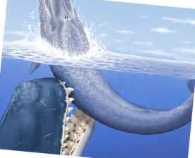 How Big Megalodon Shark