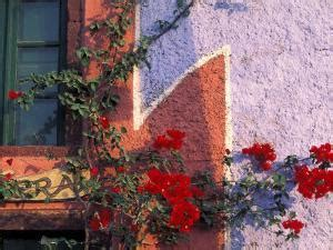 affordable architectural floral color photography