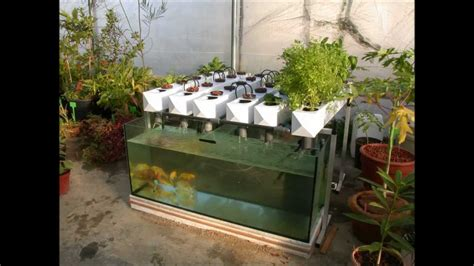 build your garden easy and healthy backyard aquaponics build your own aquaponic garden youtube
