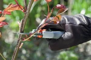Comment Tailler Les Rosiers : comment tailler un rosier pour obtenir plus de fleurs ~ Nature-et-papiers.com Idées de Décoration