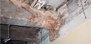La merule comment traiter la merule dans la maison for Champignon du bois dans les maisons