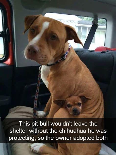funny dog snapchats      kill covid