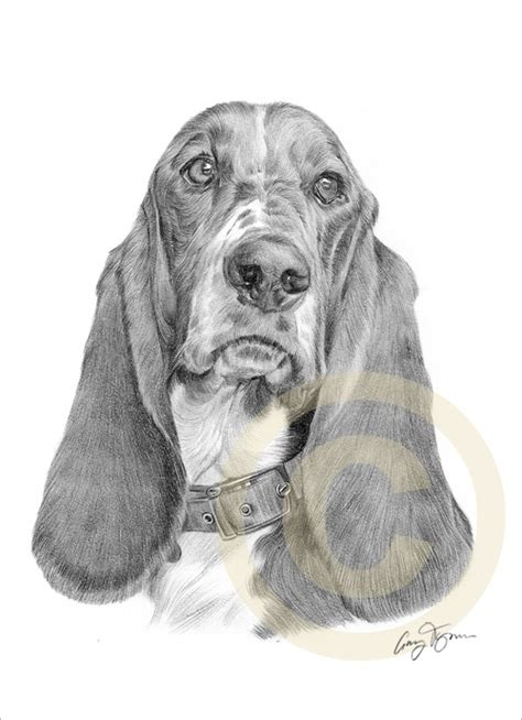 images  dog drawings  pinterest dog