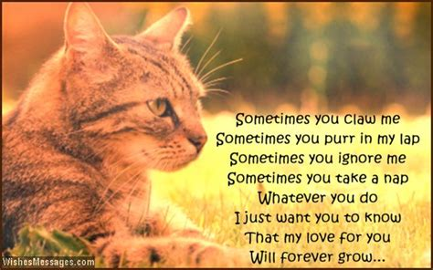 pet quotes cat image quotes  hippoquotescom