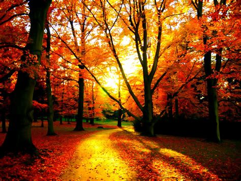 Autumn Wallpapers Widescreen by Fall Autumn Wallpaper Widescreen 5511 4624 Wallpaper
