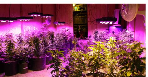 Led Light In Grow Room by The 6 Best Led Grow Lights Of 2018