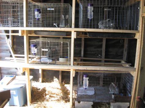 rabbit cage cages backyardherds rust rabbitry bottoms 1345 rabbits put paint