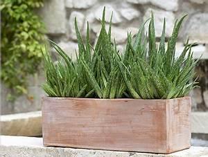 Plantes D Hiver Extérieur Balcon : plantes jardiniere terrasse l 39 atelier des fleurs ~ Nature-et-papiers.com Idées de Décoration