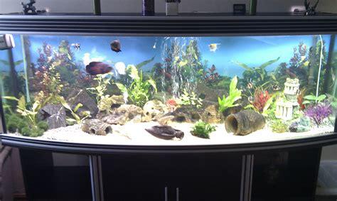 6ft 620 litre aqua one bow front marine tropical aquarium fish tank at aquarist classifieds