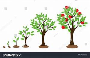 Vector Illustration Tree Growth Diagram Isolated Stock