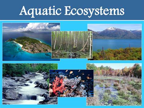 Ceiptoursscience5 Unit 3 Natural Science Ecosystems
