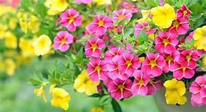 Blumen Für Den Balkon : g rtnerei blumen stockmaier ~ Lizthompson.info Haus und Dekorationen