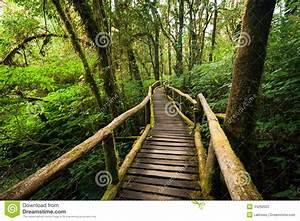 Foret à Bois : horizontal de jungle pont en bois la for t tropicale tropicale brumeuse photo stock image ~ Nature-et-papiers.com Idées de Décoration