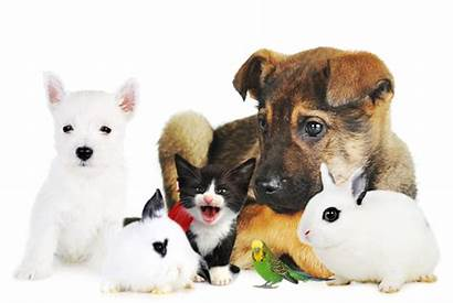 Pets Pet Care Tips Club Healthy