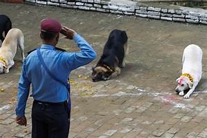Indian Police Dog Training | www.pixshark.com - Images ...