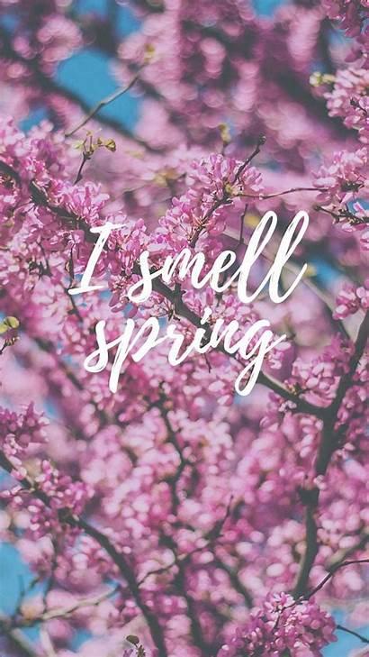 Spring Desktop Wallpapers Phone Cherry Blossom Iphone