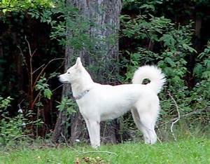 white Shepherd Husky Mix | ANIMALS WHITE/ALBINO | Pinterest