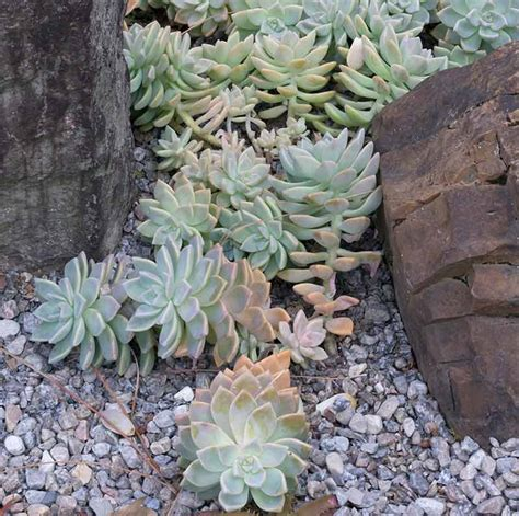 interesting plants to grow succulent savvy gardening creating a unique look indoors or out