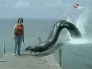 Giant sea creature eating dog - YouTube