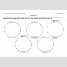 Cell Division  Year 7 By Hannahradford  Teaching Resources Tes