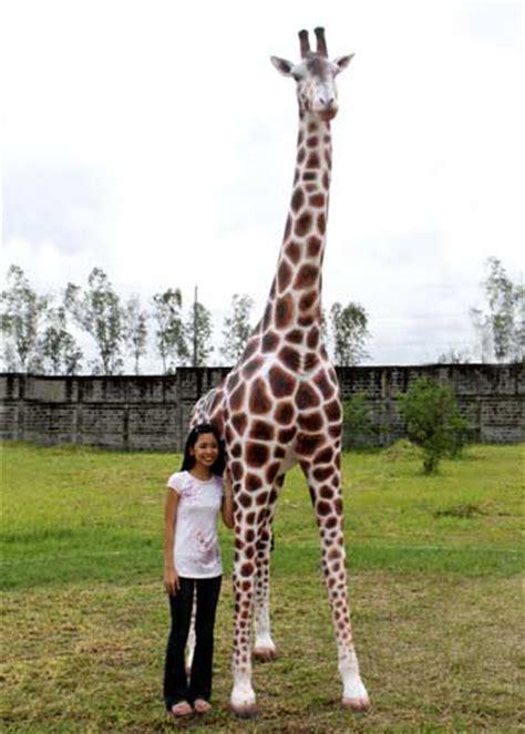 giraffe  ft giraffe  ft girh