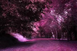 Enchanted forest 2 by CathleenTarawhiti on DeviantArt