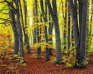 Amazing Autumn Forests  15 Photos