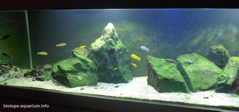 minos reef  lake malawi   biotope aquarium