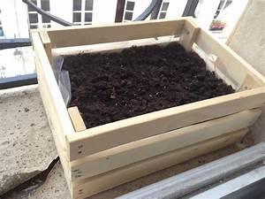 Faire Pousser Des Fraises : faire pousser des fraises et des salades chez vivianne ~ Melissatoandfro.com Idées de Décoration