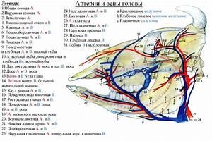 Лекарства от гипертонии нифедипин