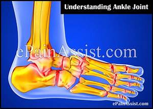 Understanding Ankle Joint  Know About The Supporting