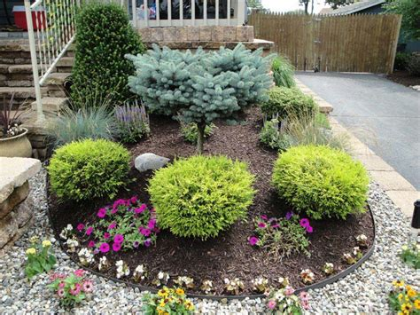 Garden Decorative Bushes by How To Use Landscaping Shrubs For Garden Beautification