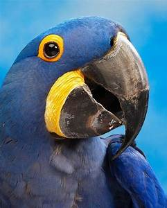 Are there other birds with beaks/bills as large as their ...