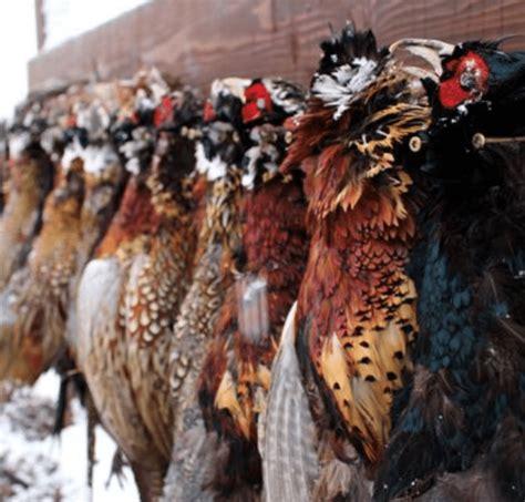nebraska upland hunt