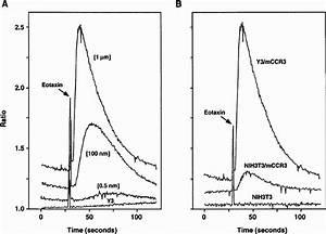 Calcium Mobilization Of Mccr3 Transfectants   A  Calcium Mobilization