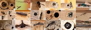 Tiere Im Insektenhotel : ein insektenhotel bauen natur gesellschaft f r fleischfressende pflanzen e v ~ Whattoseeinmadrid.com Haus und Dekorationen