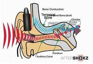 Is Bone Conduction The Future Of Headphones