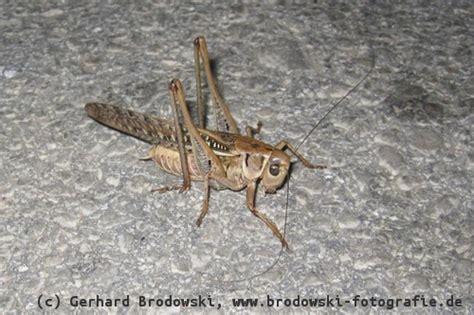 Was Essen Mäuse Gerne by Was Fressen V 246 Gel Jungv 246 Gel Fressen Insekten Schnecken