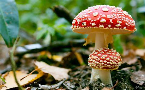 A janë kërpudhat bimë? - abazajeti.com