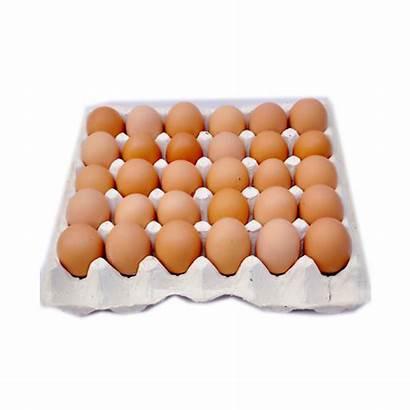 Eggs Crate Medium Dairy Each