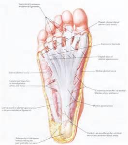 douleur exterieur du pied droit br 251 lure du talon chiroenergie