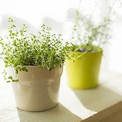 Zimmerpflanzen Sonniger Standort : zimmerpflanzen standort pflege gie en d ngen ausputzen umtopfen ~ Whattoseeinmadrid.com Haus und Dekorationen