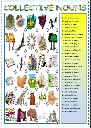 collective nouns matching activity