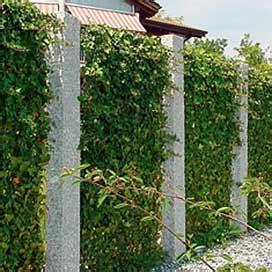 Ganzjahres Pflanzen by Natur Sichtschutz Aus Bambus Rinde Weide Pvc Streifen
