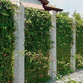 Immergrüne Kletterpflanze Für Zaun : natur sichtschutz aus bambus rinde weide pvc streifen ~ Michelbontemps.com Haus und Dekorationen