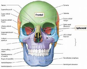 What Are All The Bones Of The Facial Structure Called