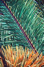 Exotic Floral Background; Palm Leaf Pattern/Background