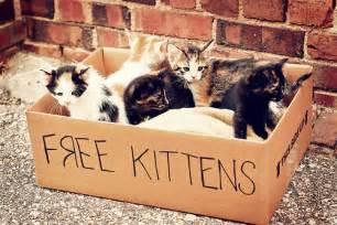 free cats on craigslist a mind of free kittens a charmed yogi