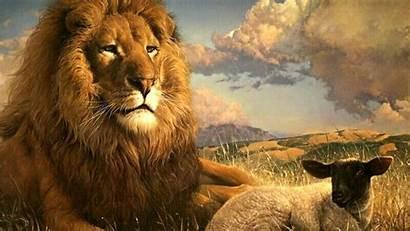 Desktop Lion Wallpapers Screensavers Backgrounds King